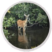 Sunset River Doe Round Beach Towel by Judy Johnson