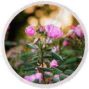 Round Beach Towel featuring the photograph Sunset Roses by Parker Cunningham