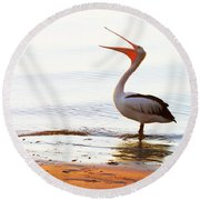 Sunshine Coast Pelican Round Beach Towel