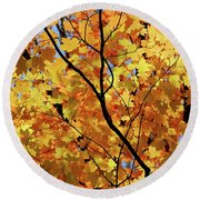Round Beach Towel featuring the photograph Sunshine In Maple Tree by Elena Elisseeva