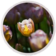 Round Beach Towel featuring the photograph Sunshine Tulips by Angela DeFrias