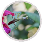 Round Beach Towel featuring the photograph Surprise At The Rose by Debby Pueschel