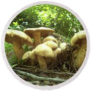 Surprise Fungi In Gibbs Garden Round Beach Towel