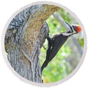 Surprised By Pileated Round Beach Towel