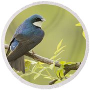 Swallow Round Beach Towel by Mircea Costina Photography