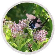 Female American Swallowtail Papilio Polyxenes Round Beach Towel