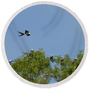 Swallow-tailed Kite Flyover Round Beach Towel