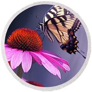 Round Beach Towel featuring the photograph Swallowtail And Coneflower by Byron Varvarigos