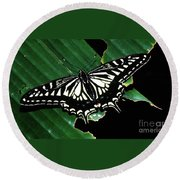 Swallowtail Butterfly- Close Round Beach Towel