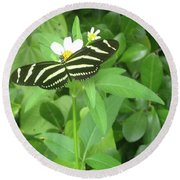 Swallowtail Butterfly On Leaf Round Beach Towel