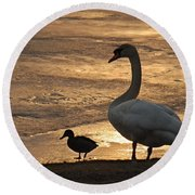 Round Beach Towel featuring the photograph Swan And Baby At Sunset by Richard Bryce and Family