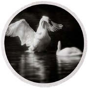 Swan Display Round Beach Towel