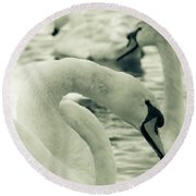 Swan In Water Round Beach Towel