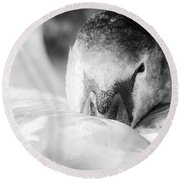 Swan Portrait Round Beach Towel