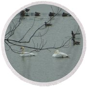 Swans With Geese Round Beach Towel