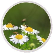 Round Beach Towel featuring the photograph Sweat Bee by Rick Morgan