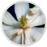 Sweet Bay Magnolia Bloom  #2 Round Beach Towel by Louise Kumpf