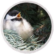 Sweet Chickadee Round Beach Towel by Angie Rea