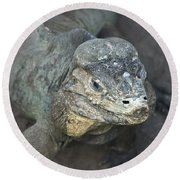 Round Beach Towel featuring the photograph Sweet Face Of Rhinoceros Iguana by Miroslava Jurcik