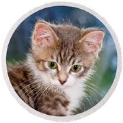 Sweet Kitten Round Beach Towel