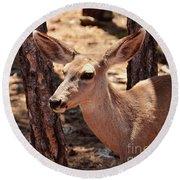Round Beach Towel featuring the photograph Sweet Little Mule Deer by Debby Pueschel