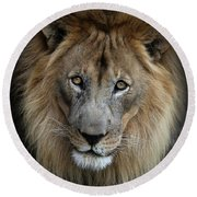 Sweet Male Lion Round Beach Towel