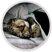 Round Beach Towel featuring the photograph Sweet Simba Photo A8117 by Mas Art Studio