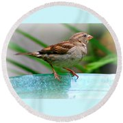 Sweet Sparrow Round Beach Towel by Barbara S Nickerson