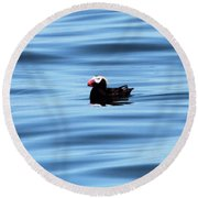 Swimming Puffin In Blue Water Round Beach Towel by Dan Sproul