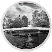 Swimming With Cows II Round Beach Towel