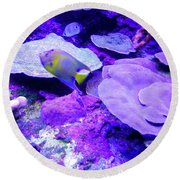Round Beach Towel featuring the photograph Ta Purple Coral And Fish by Francesca Mackenney