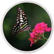 Tailed Jay Butterfly -graphium Agamemnon- On Pink Flower Round Beach Towel