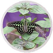 Tailed Jay Butterfly In Puple Round Beach Towel