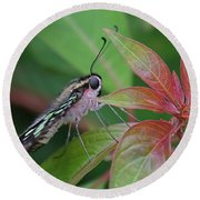 Tailed Jay Butterfly Macro Shot Round Beach Towel