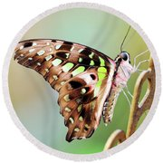 Tailed Jay Round Beach Towel