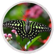 Tailed Jay4 Round Beach Towel by Ronda Ryan