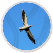 Take Flight Round Beach Towel