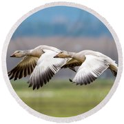 Round Beach Towel featuring the photograph Tandem Glide by Mike Dawson