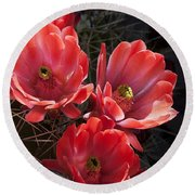 Round Beach Towel featuring the photograph Tangerine Cactus Flower by Phyllis Denton