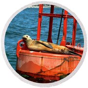 Round Beach Towel featuring the photograph Tanning Sea Lion On Buoy by Mariola Bitner