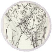 Round Beach Towel featuring the drawing Taper Tip Hawksbeard, Crepis Acuminate by Antoine Sonrel