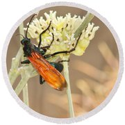 Tarantula Hawk Round Beach Towel