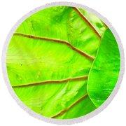 Taro Leaf Close Up In Green Round Beach Towel