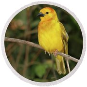 Taveta Golden Weaver #2 Round Beach Towel