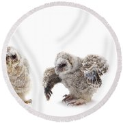 Tawny Owl Family Round Beach Towel