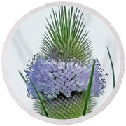 Teasel On White Round Beach Towel