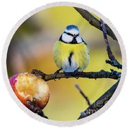 Round Beach Towel featuring the photograph Tempting by Torbjorn Swenelius