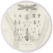 Termites, Macrotermes Bellicosus Round Beach Towel