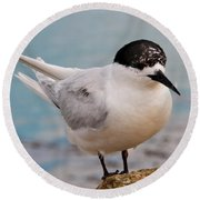 Round Beach Towel featuring the photograph Tern 1 by Werner Padarin