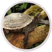 Tess The Map Turtle #3 Round Beach Towel